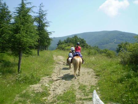 campo cavallo avventura chiara b 482-w450