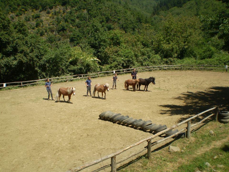 i pony alle redini lunghe